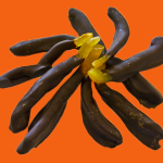 candied_chocolate_orange