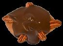 sea_turtle_salted